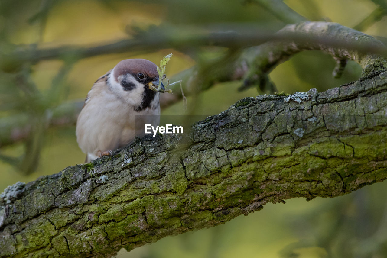one animal, animal wildlife, animals in the wild, vertebrate, tree, bird, focus on foreground, branch, perching, plant, day, nature, no people, close-up, outdoors, tree trunk, selective focus