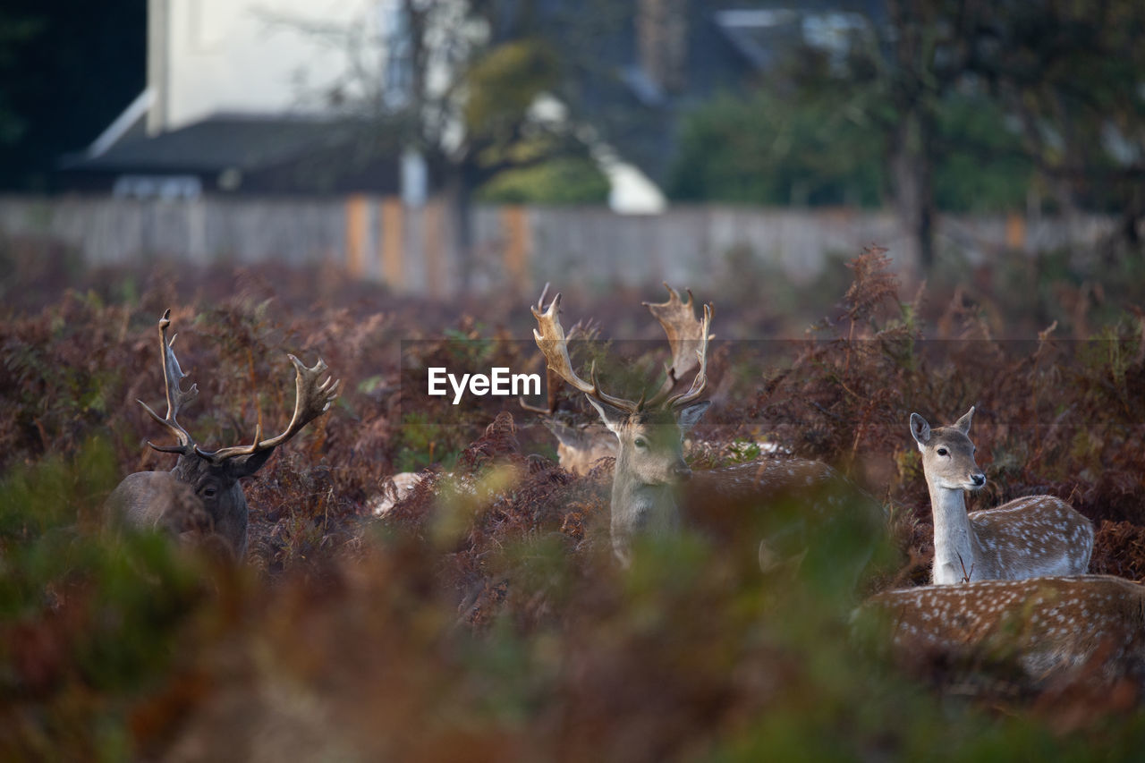 selective focus, animal, mammal, nature, field, animal themes, day, land, plant, no people, group of animals, animal wildlife, vertebrate, deer, animals in the wild, outdoors, plant part, leaf, domestic animals, herbivorous, surface level