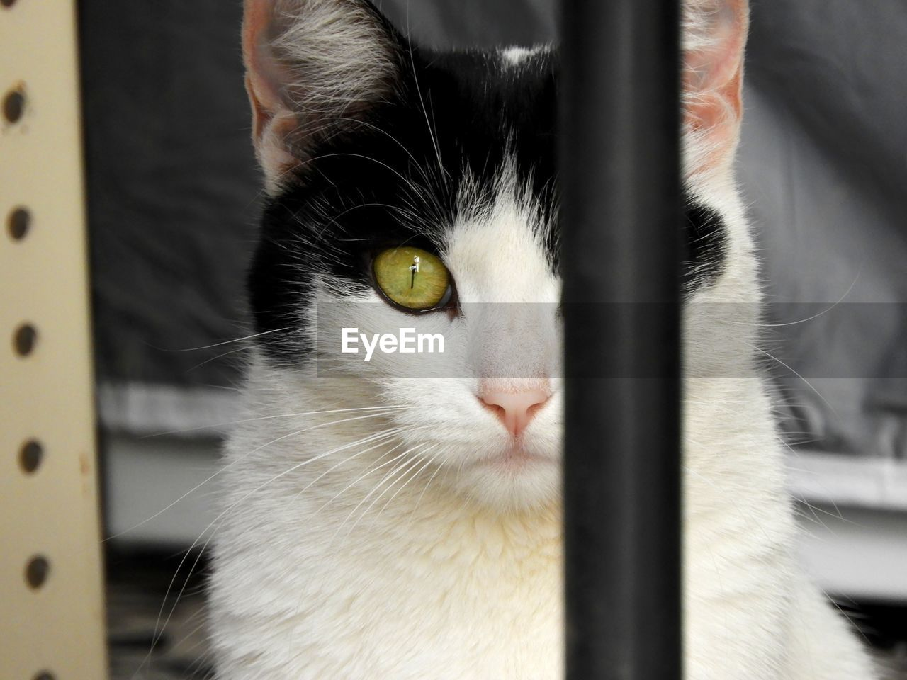 domestic, pets, domestic animals, one animal, animal themes, mammal, animal, cat, feline, domestic cat, whisker, close-up, vertebrate, portrait, no people, focus on foreground, animal body part, looking at camera, metal, animal head, animal eye, yellow eyes