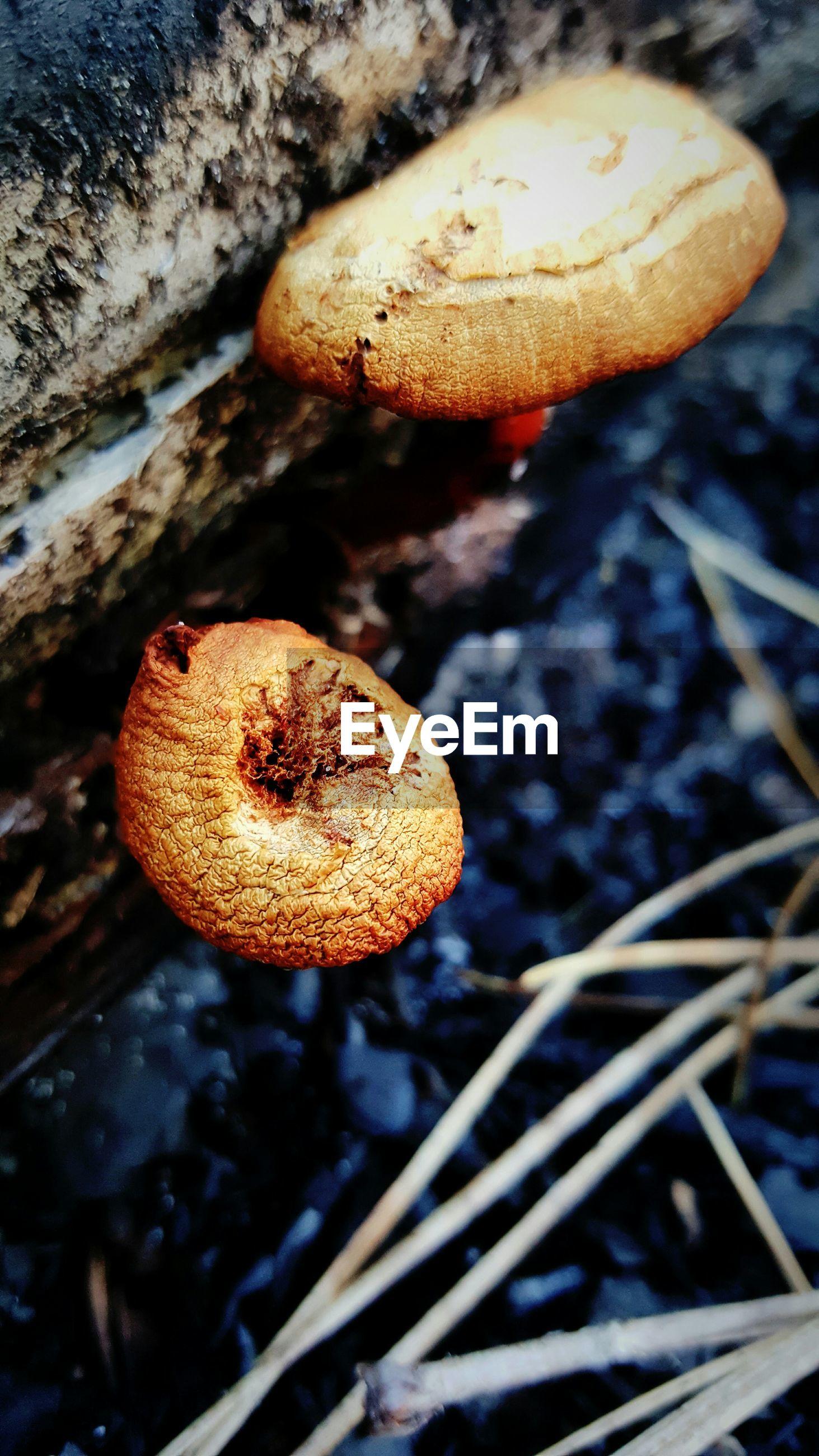 Close-up of mushroom growing on tree