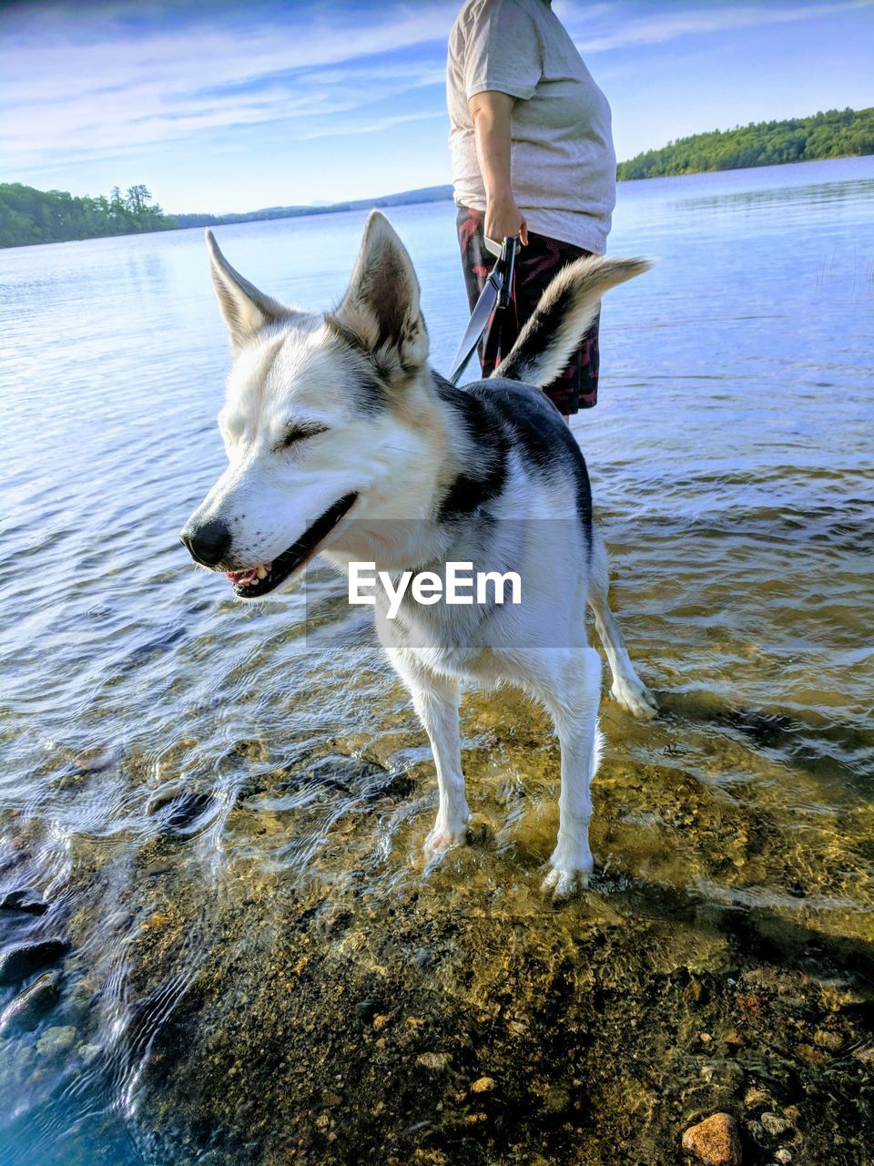 one animal, pets, domestic, domestic animals, mammal, animal, dog, canine, animal themes, water, vertebrate, one person, day, real people, lifestyles, nature, sea, leisure activity, beach, pet owner, outdoors