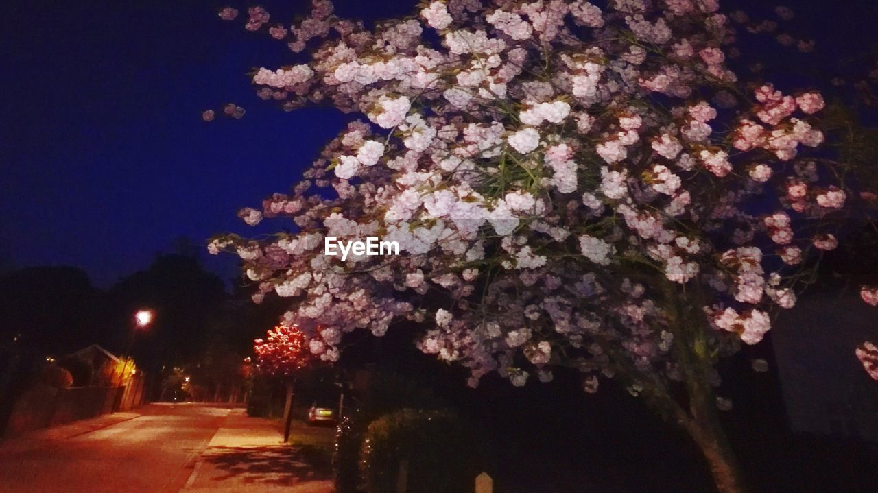 tree, night, flower, illuminated, blossom, branch, beauty in nature, nature, no people, outdoors, springtime, fragility, growth, road, freshness, sky, close-up