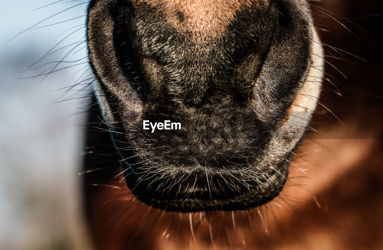 one animal, domestic animals, animal themes, close-up, mammal, no people, animal head, pets, indoors, day