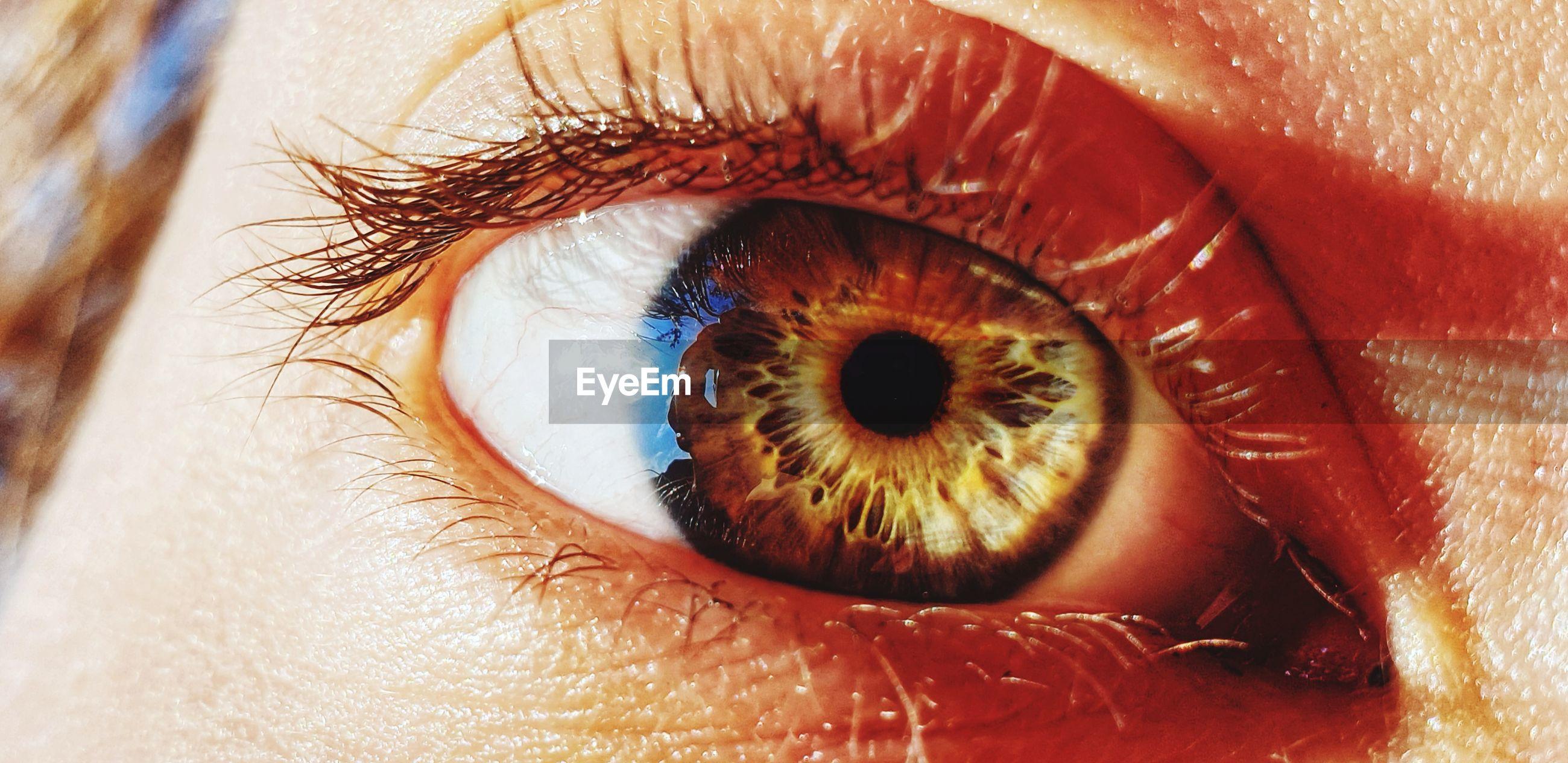 Cropped portrait of woman eye