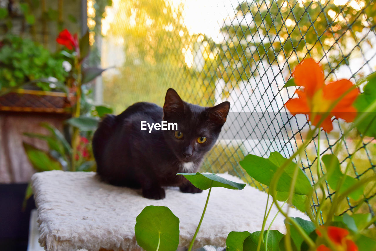 BLACK CAT IN A FLOWER