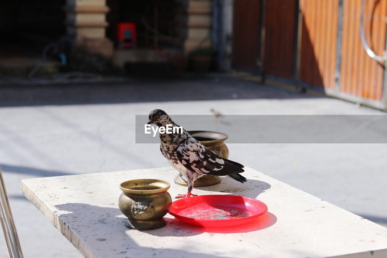 BIRD ON A TABLE