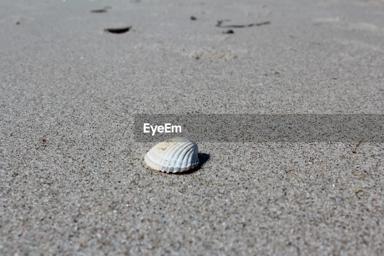 animal wildlife, shell, animal, animal shell, animal themes, land, beach, sand, animals in the wild, one animal, seashell, day, no people, close-up, nature, invertebrate, mollusk, beauty in nature, selective focus, gastropod, outdoors, surface level, marine