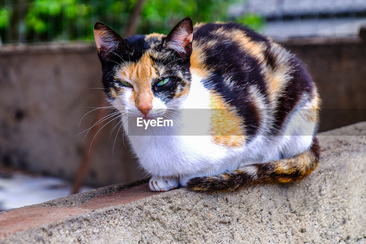cat, domestic cat, feline, animal, animal themes, one animal, pets, mammal, domestic, domestic animals, vertebrate, focus on foreground, no people, portrait, whisker, looking at camera, close-up, day, wall, looking