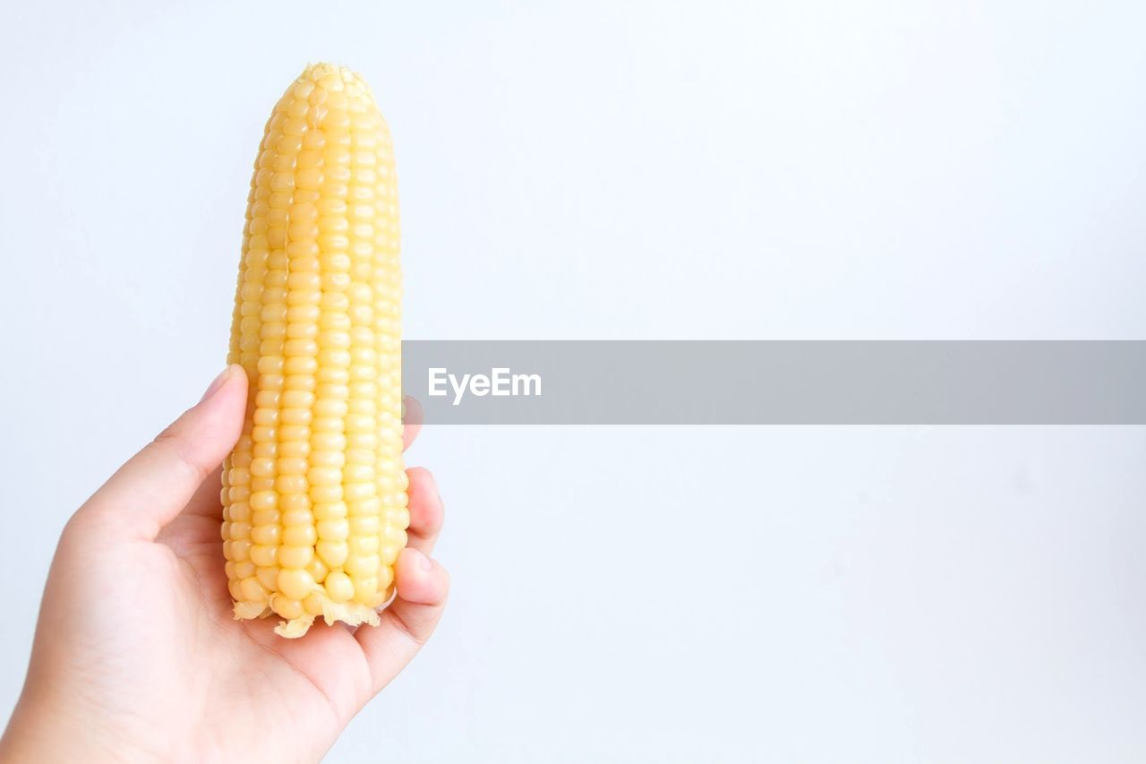 Cropped Image Of Hand Holding Corn Against White Background