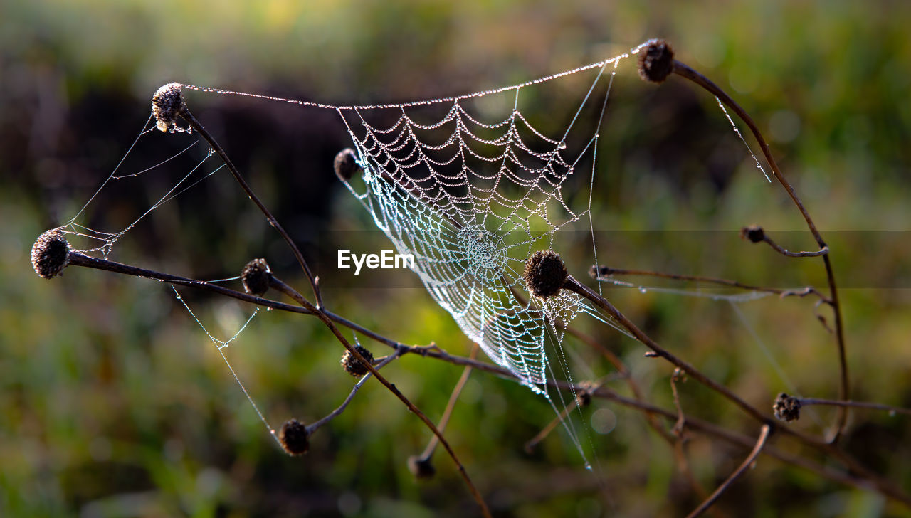 CLOSE-UP OF SPIDER WEB ON PLANT