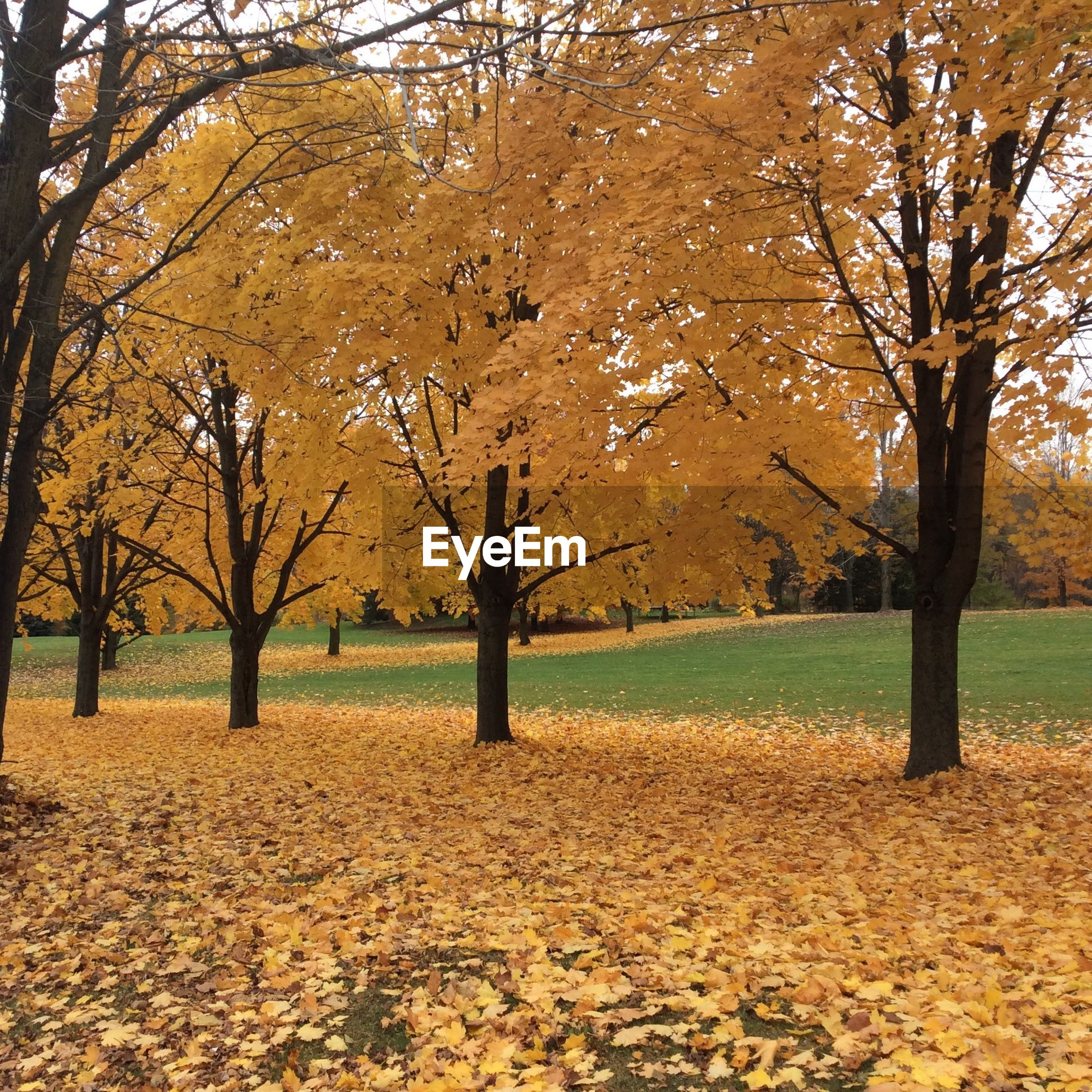 AUTUMN LEAVES ON A FIELD