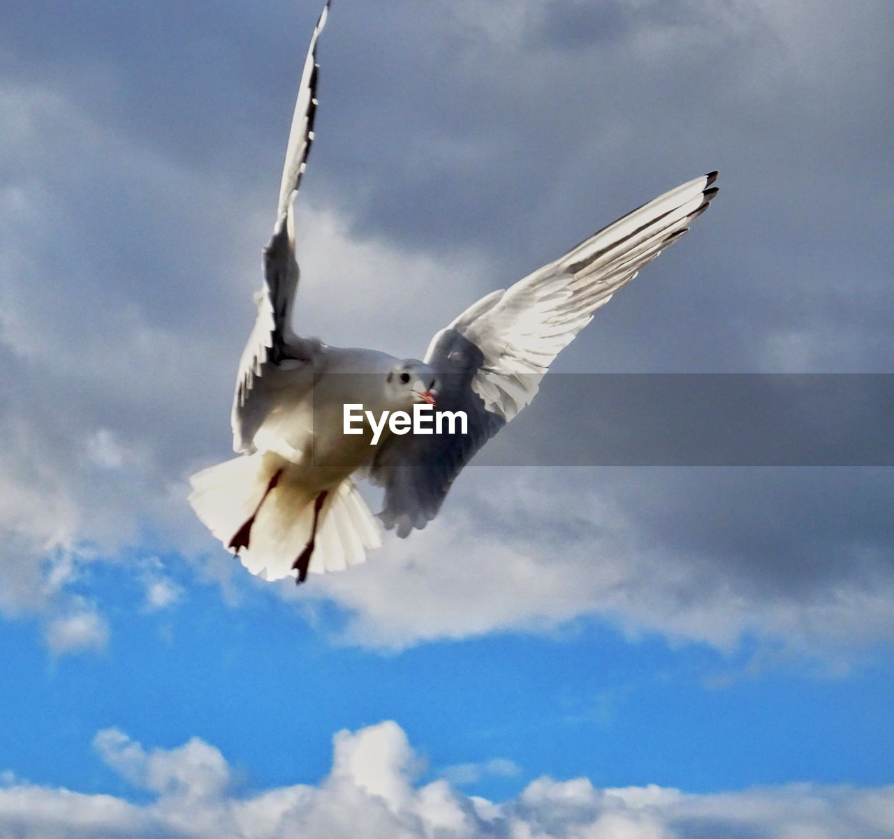 flying, spread wings, sky, bird, cloud - sky, one animal, low angle view, animal themes, mid-air, animals in the wild, seagull, day, outdoors, no people, nature, animal wildlife, motion, sea bird, beauty in nature