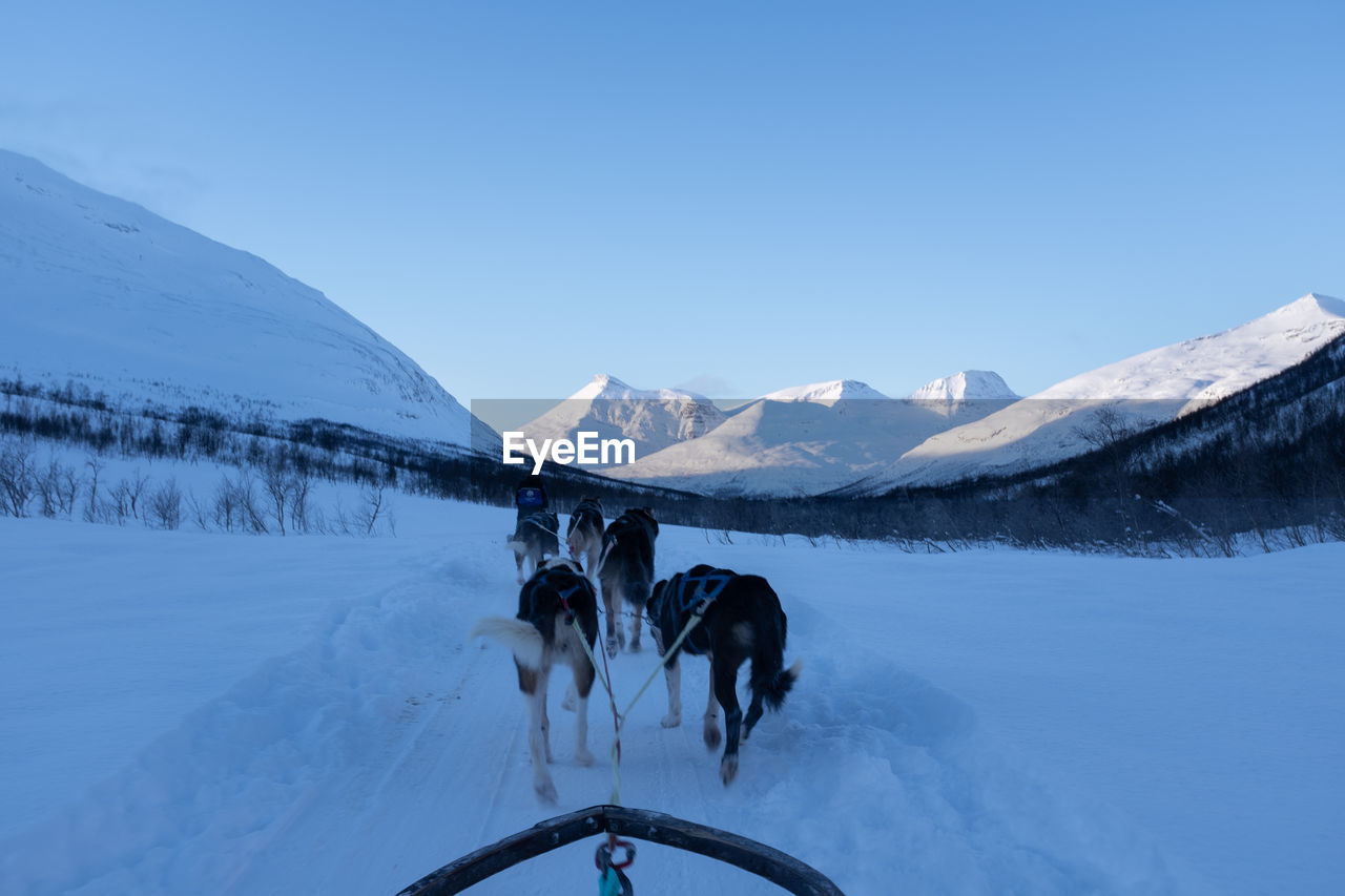 Point of view of dogs pulling sled with snowy mountains in background.
