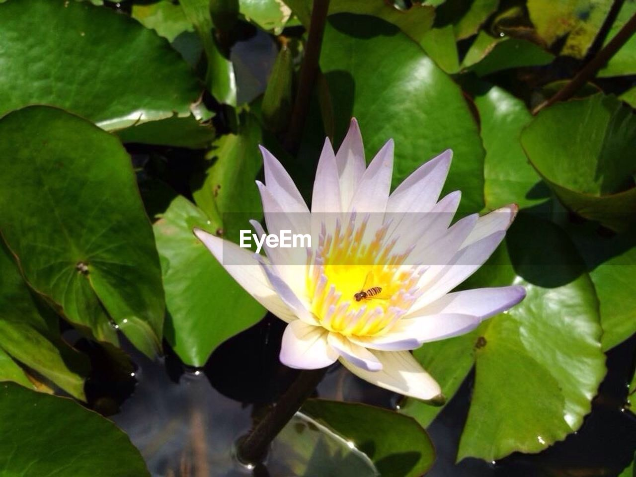flower, leaf, growth, nature, petal, beauty in nature, freshness, fragility, flower head, plant, no people, blooming, water lily, outdoors, day, close-up