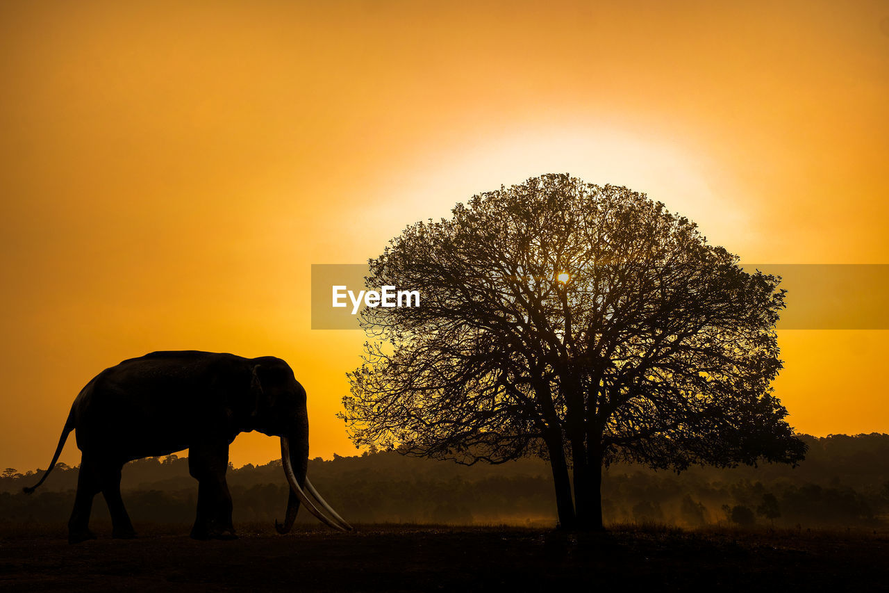 SILHOUETTE TREE ON FIELD DURING SUNSET
