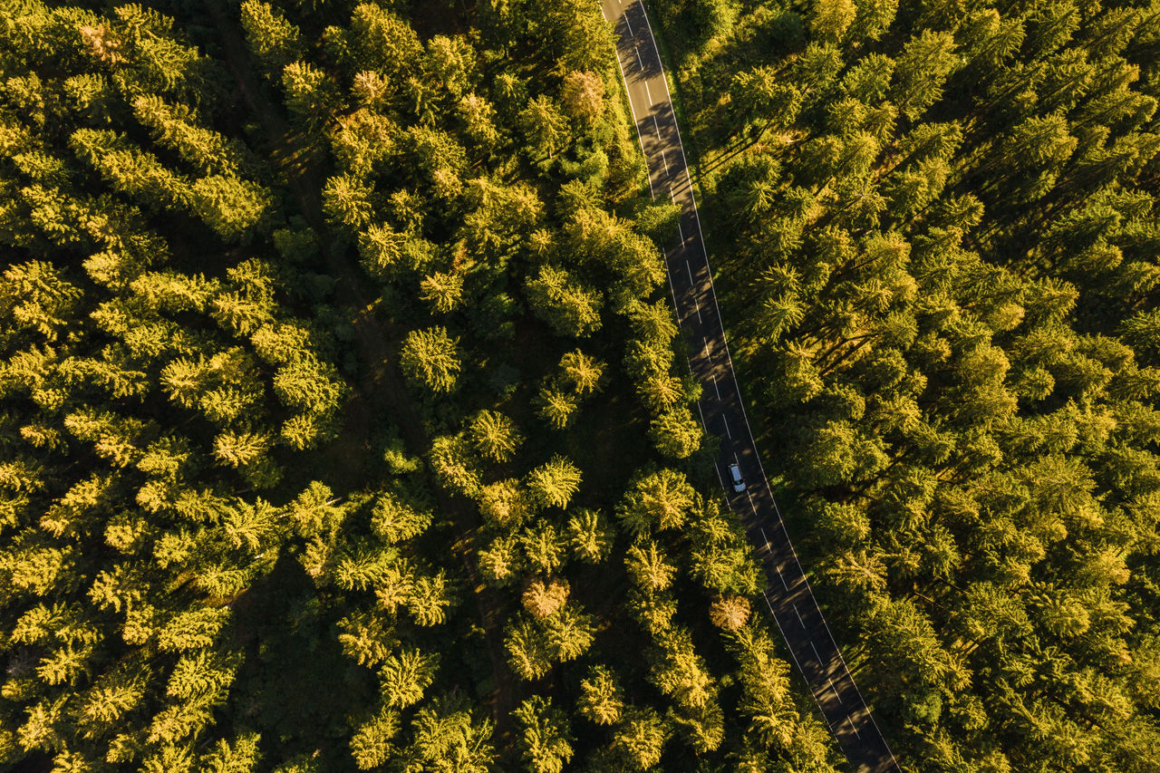 Aerial View Of Coniferous Trees Growing In Forest