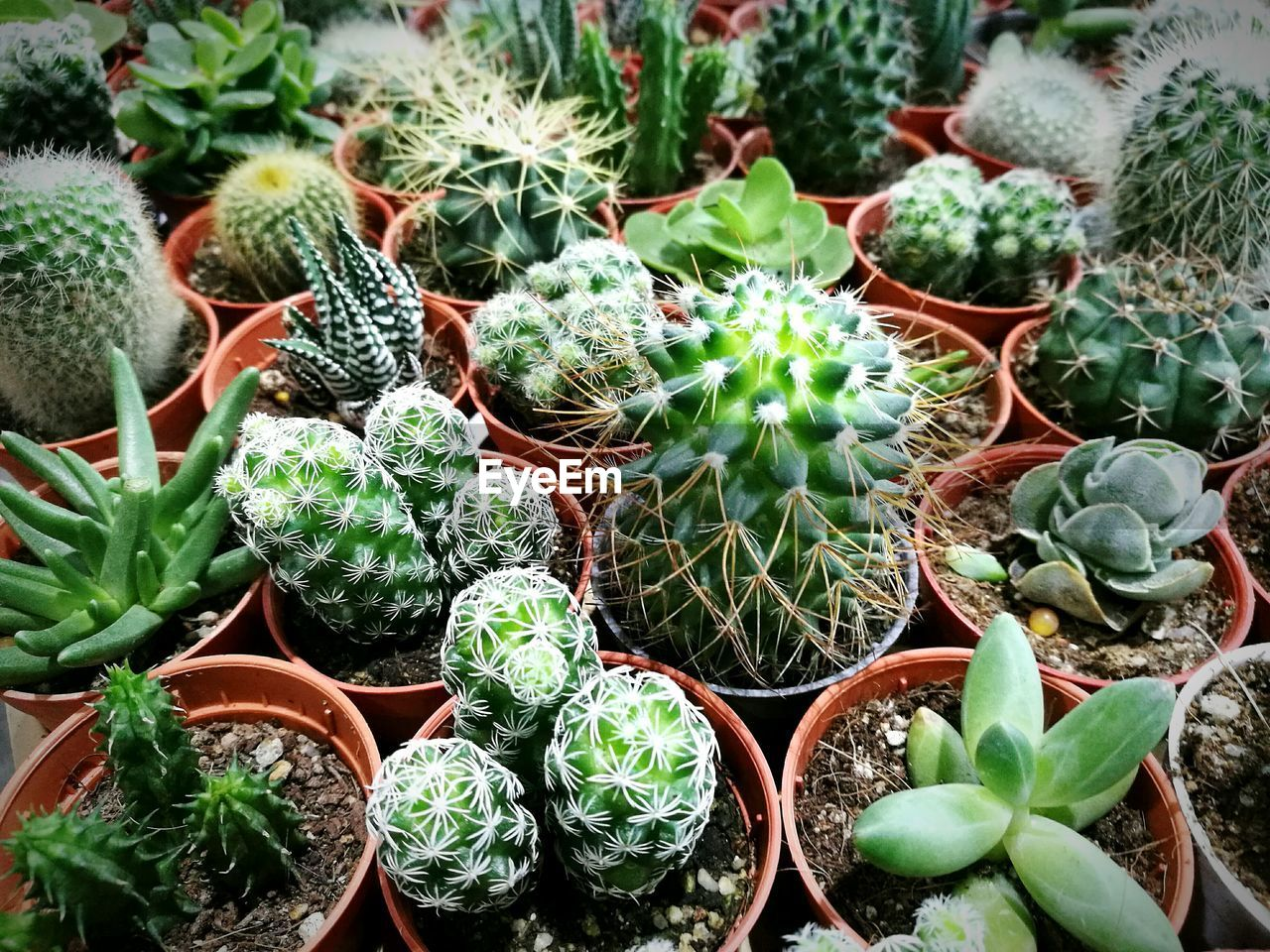 cactus, growth, plant, green color, thorn, potted plant, nature, no people, spiked, day, outdoors, high angle view, leaf, close-up, beauty in nature, freshness, prickly pear cactus, plant nursery