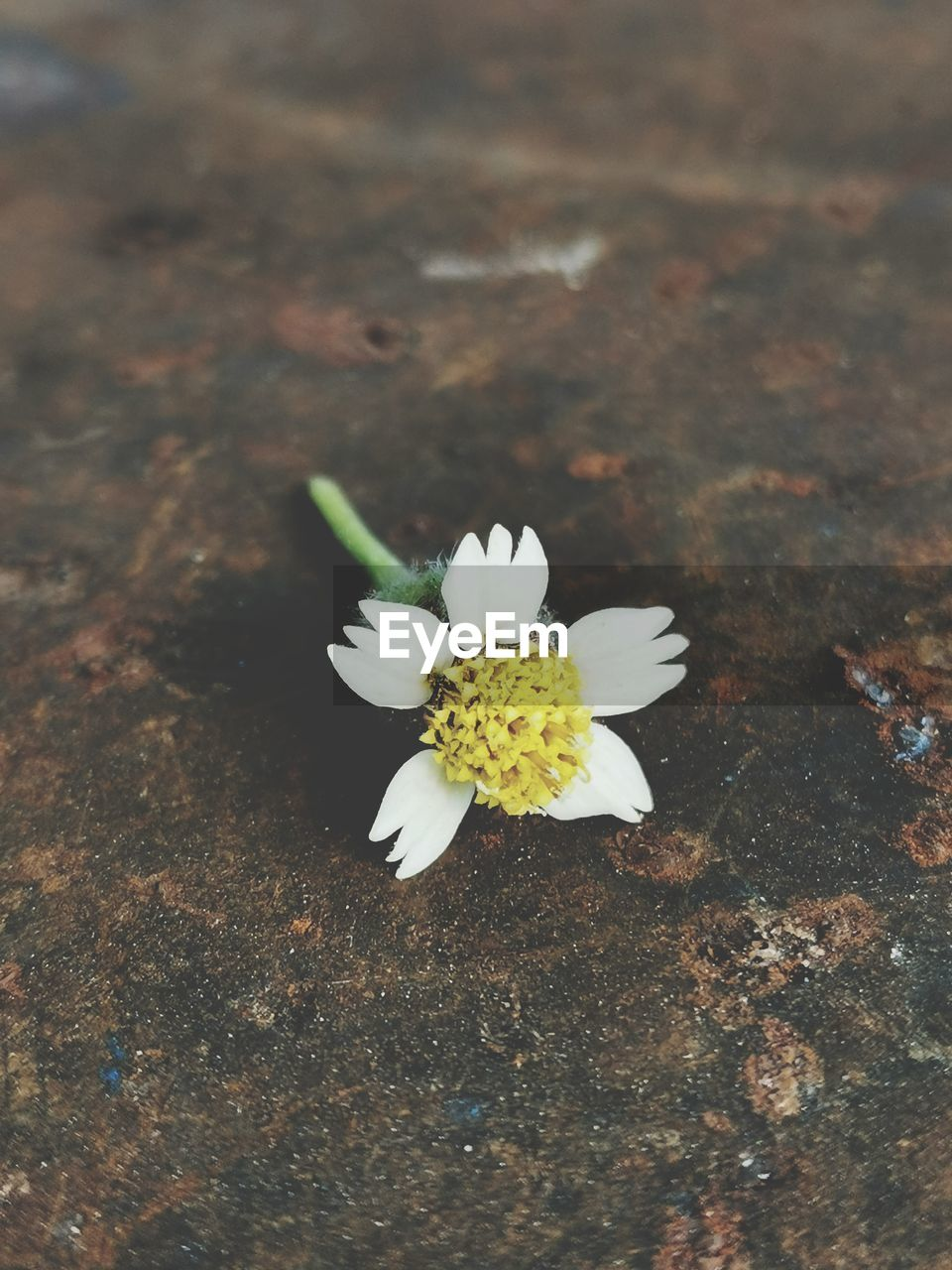 HIGH ANGLE VIEW OF WHITE FLOWER