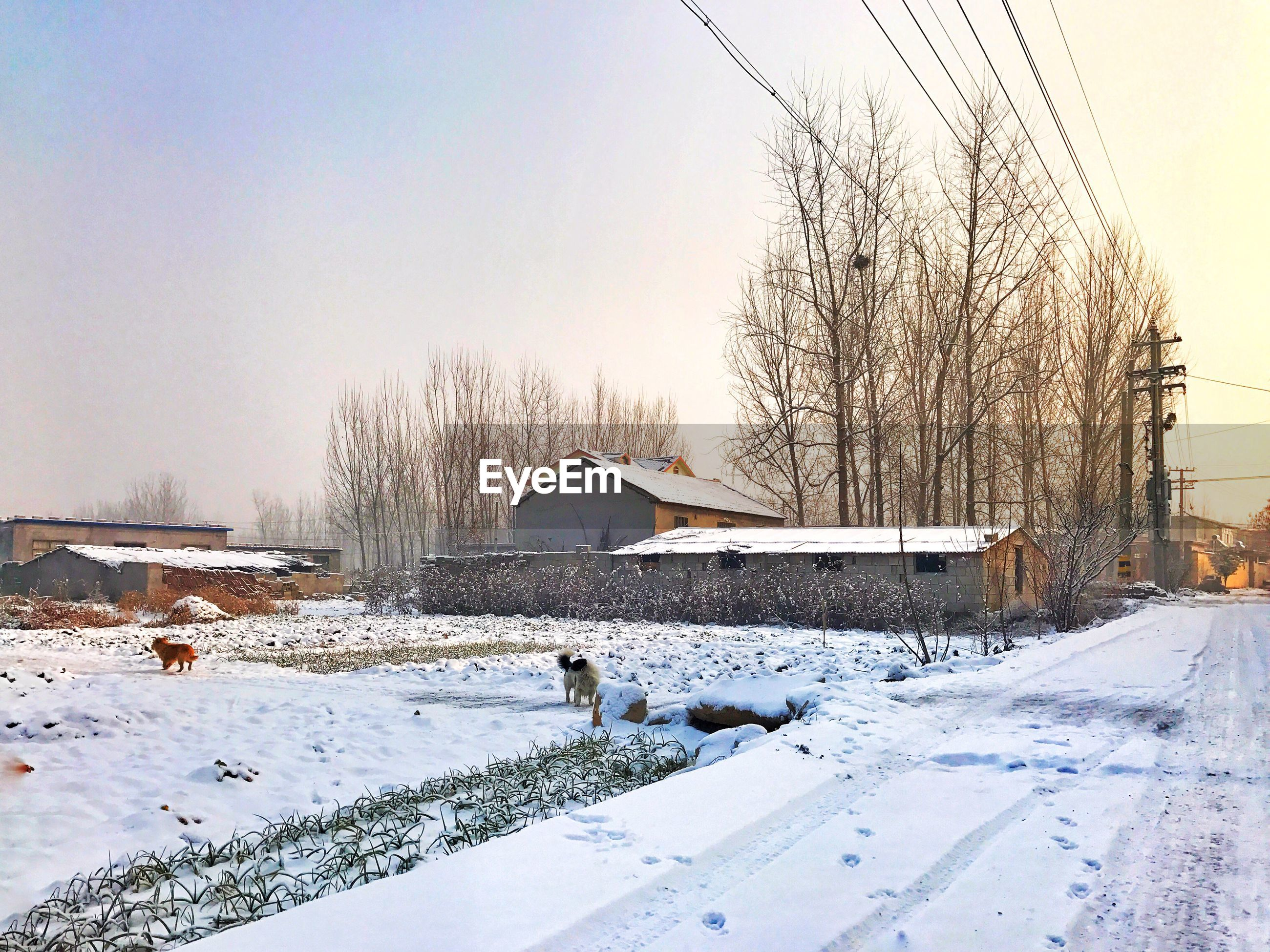 cold temperature, winter, nature, sky, no people, snow, built structure, house, building exterior, outdoors, bird, tree, clear sky, sunset, day, beauty in nature, animal themes, architecture