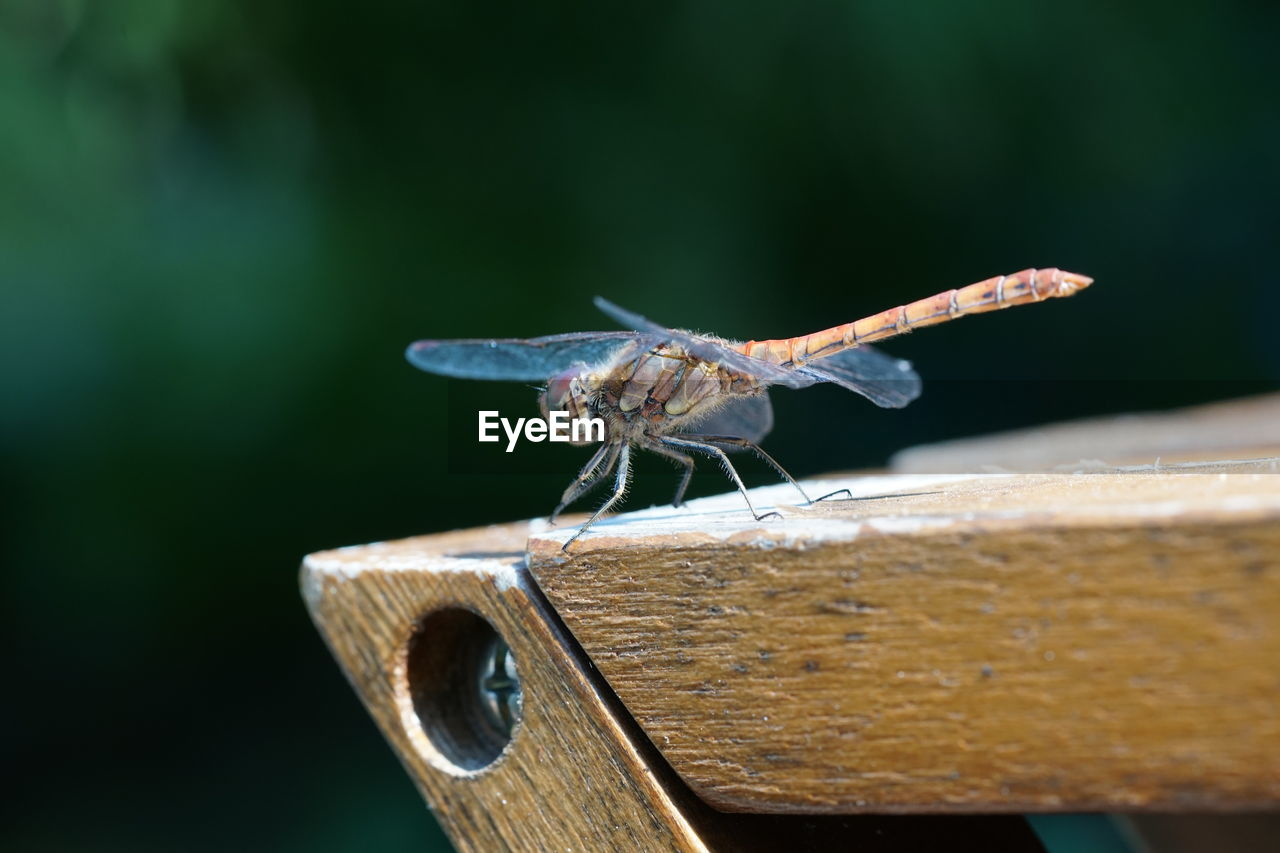 invertebrate, animal wildlife, animal, insect, animals in the wild, animal themes, one animal, close-up, wood - material, animal wing, focus on foreground, day, no people, selective focus, zoology, nature, outdoors, animal body part, perching, plant part