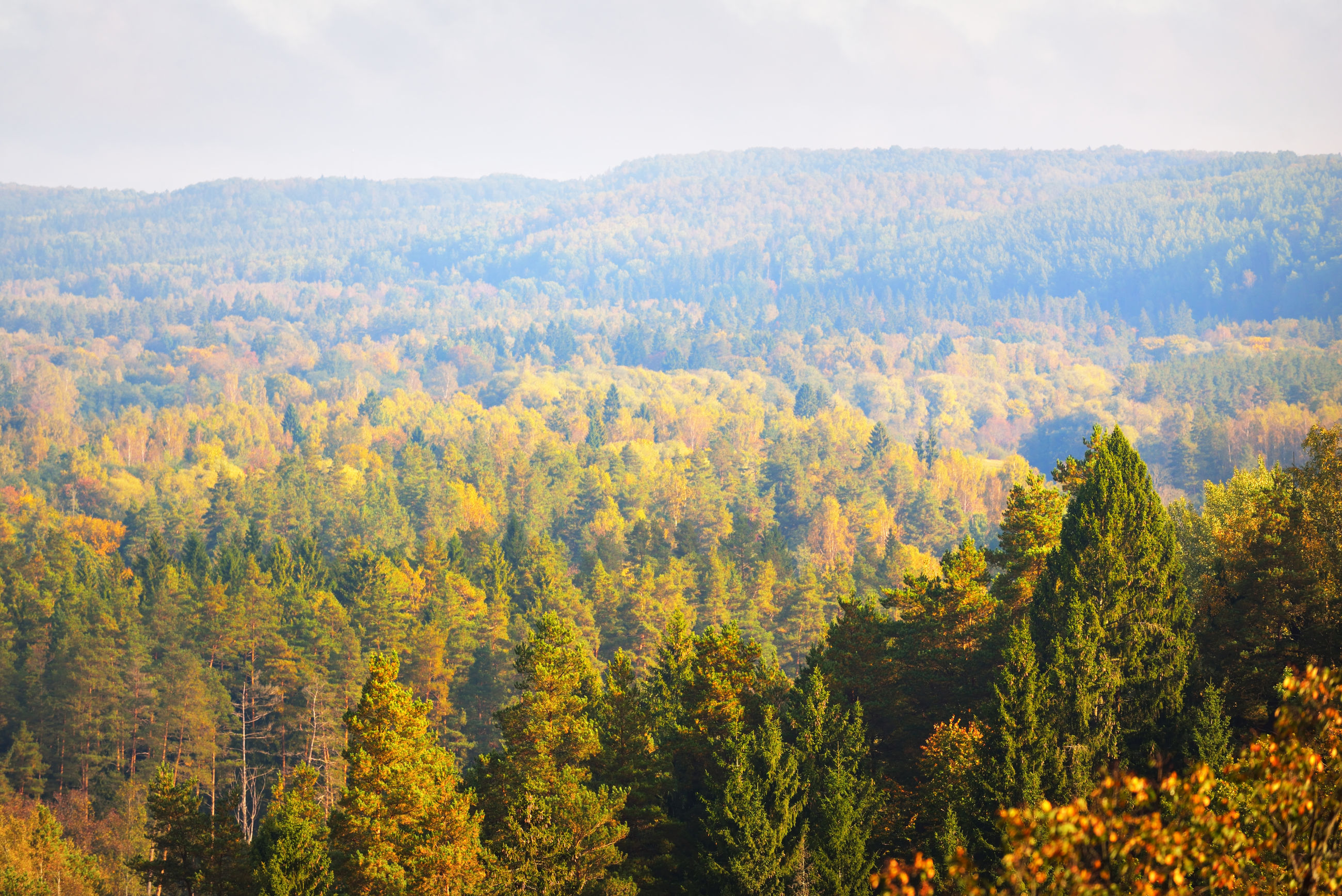 SCENIC VIEW OF TREES ON LANDSCAPE AGAINST SKY