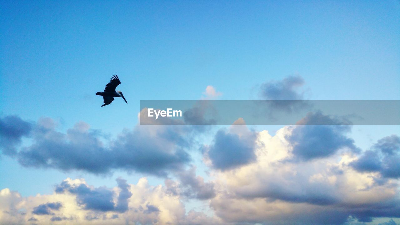 sky, bird, flying, animal themes, low angle view, vertebrate, cloud - sky, animals in the wild, animal, animal wildlife, one animal, silhouette, nature, day, mid-air, spread wings, no people, outdoors, blue, beauty in nature, height