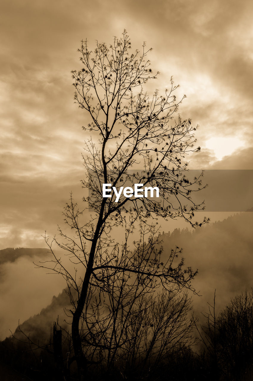 sky, tranquility, tranquil scene, beauty in nature, nature, sunset, cloud - sky, scenics, tree, outdoors, silhouette, no people, low angle view, landscape, branch, mountain, bare tree, day