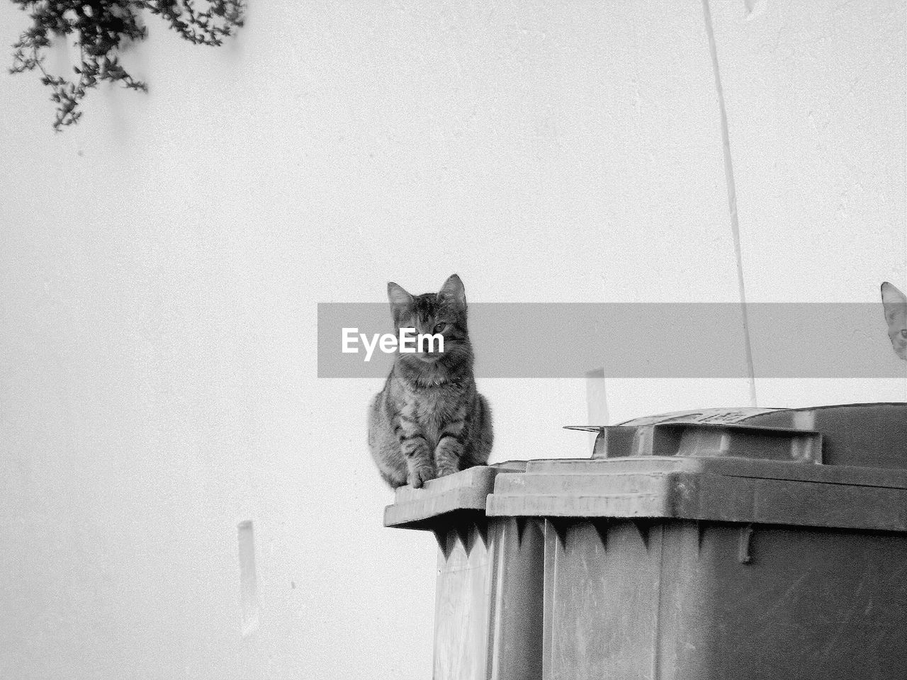 Cat Sitting On Garbage Bin