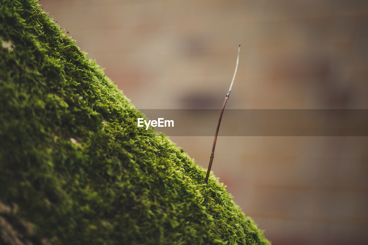 green color, selective focus, close-up, plant, focus on foreground, growth, no people, day, nature, beauty in nature, moss, outdoors, tranquility, plant part, leaf, tree, green, wood - material, pattern