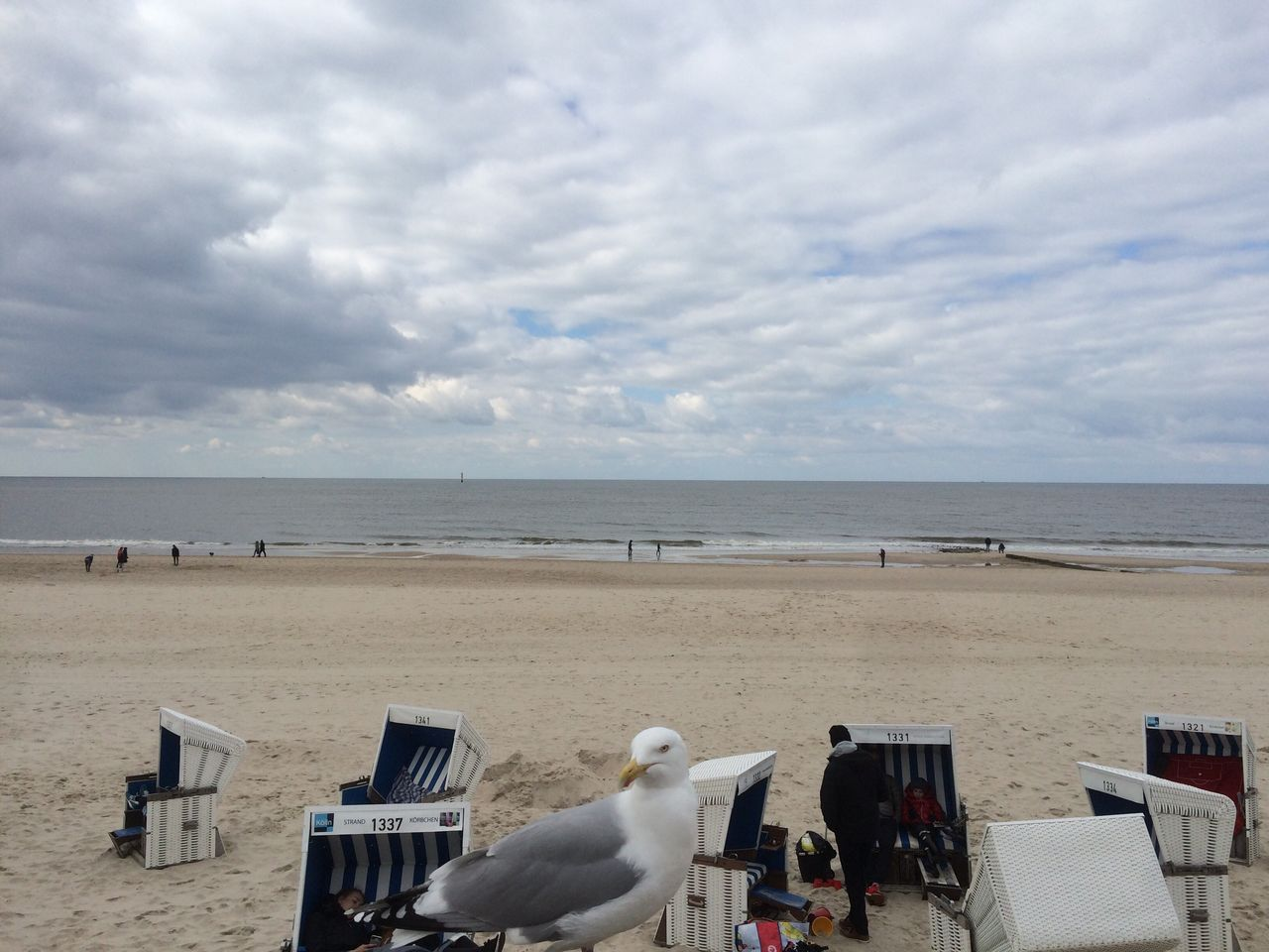 sea, beach, horizon over water, sky, nature, water, chair, scenics, cloud - sky, tranquility, day, sand, outdoors, tranquil scene, beauty in nature, animal themes, vacations, seat, real people, sitting, mammal