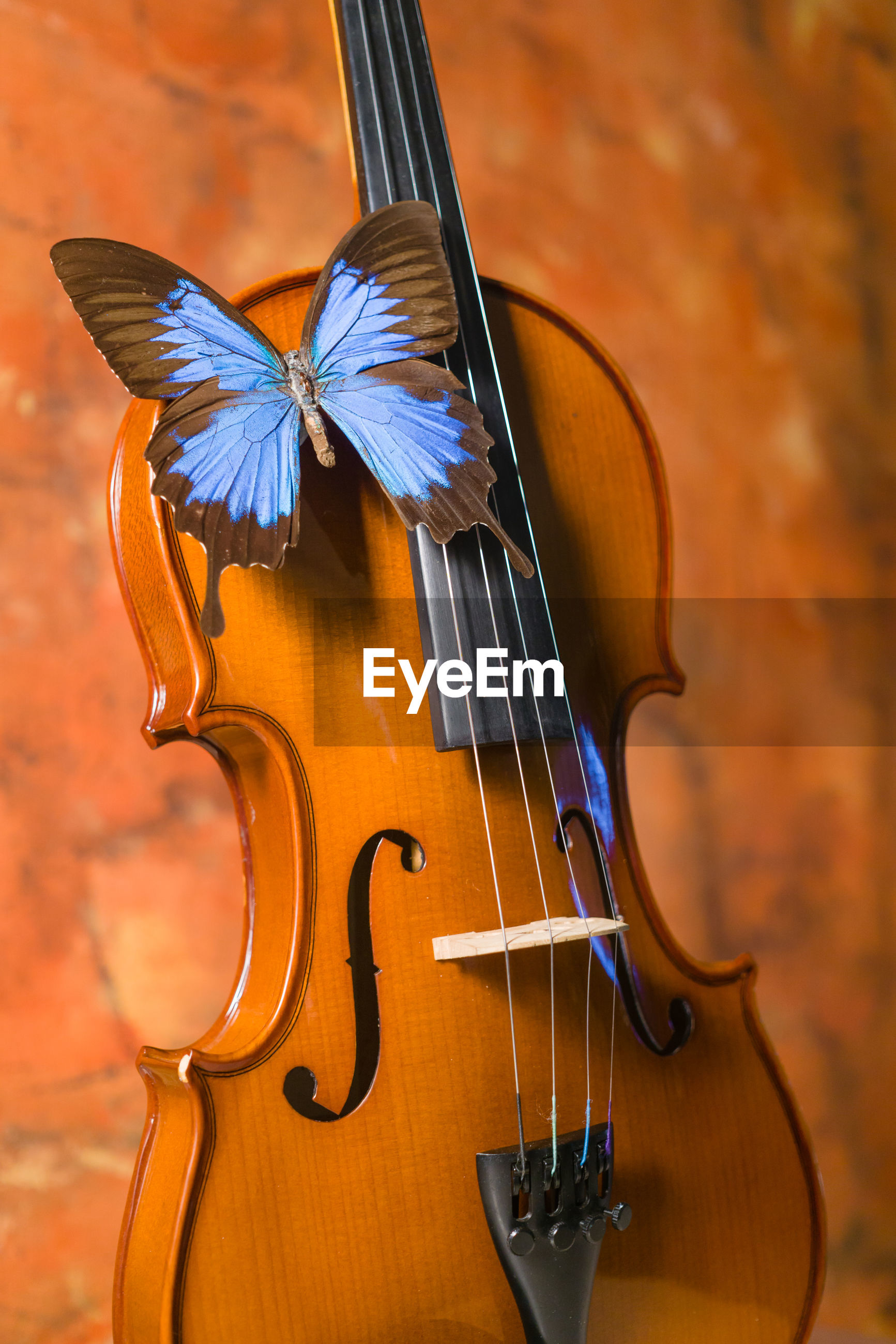 Close-up of violin and blue butterfly on rustic background