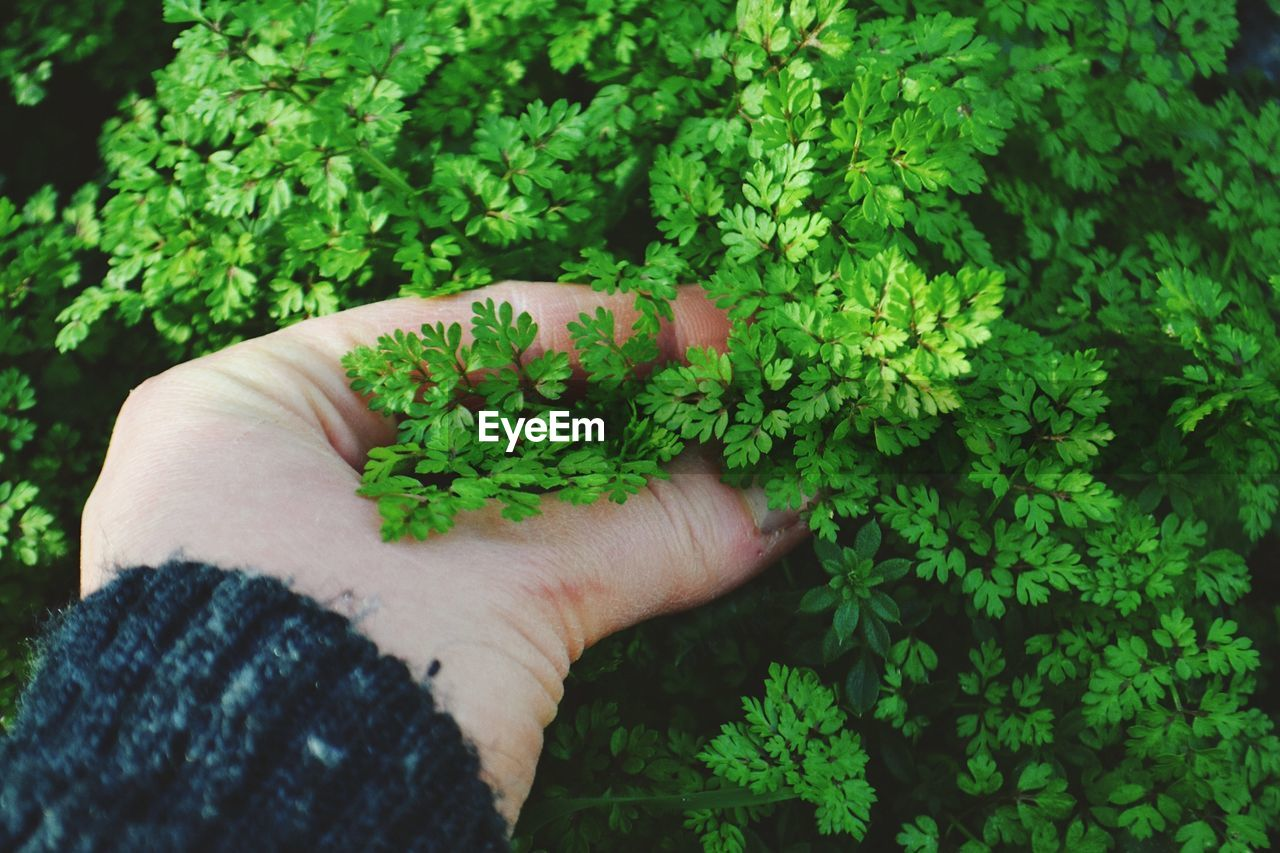 human hand, hand, human body part, one person, plant, holding, real people, green color, unrecognizable person, personal perspective, growth, human finger, finger, focus on foreground, lifestyles, nature, body part, day, close-up, outdoors, human limb