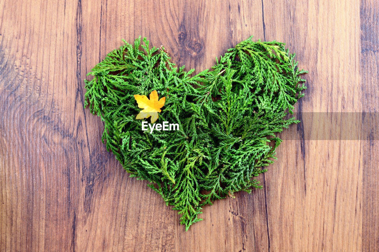 wood - material, green color, plant, flower, directly above, freshness, heart shape, flowering plant, high angle view, nature, positive emotion, love, emotion, no people, food and drink, beauty in nature, table, food, outdoors, flower head, flower arrangement, flower pot