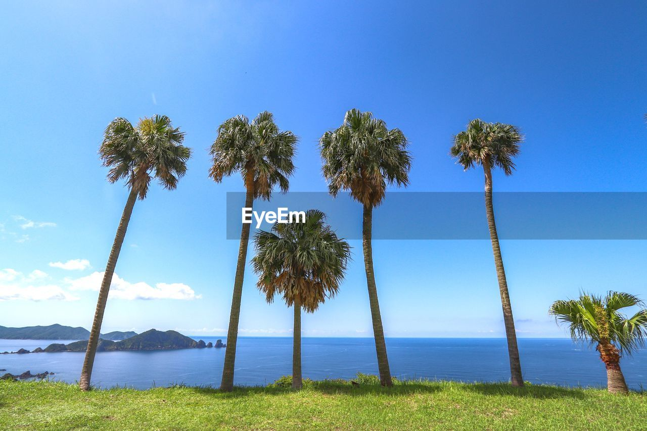 plant, sky, tree, palm tree, beauty in nature, water, scenics - nature, tropical climate, tranquility, blue, tranquil scene, growth, nature, sea, horizon over water, no people, land, day, horizon, outdoors, coconut palm tree, tropical tree