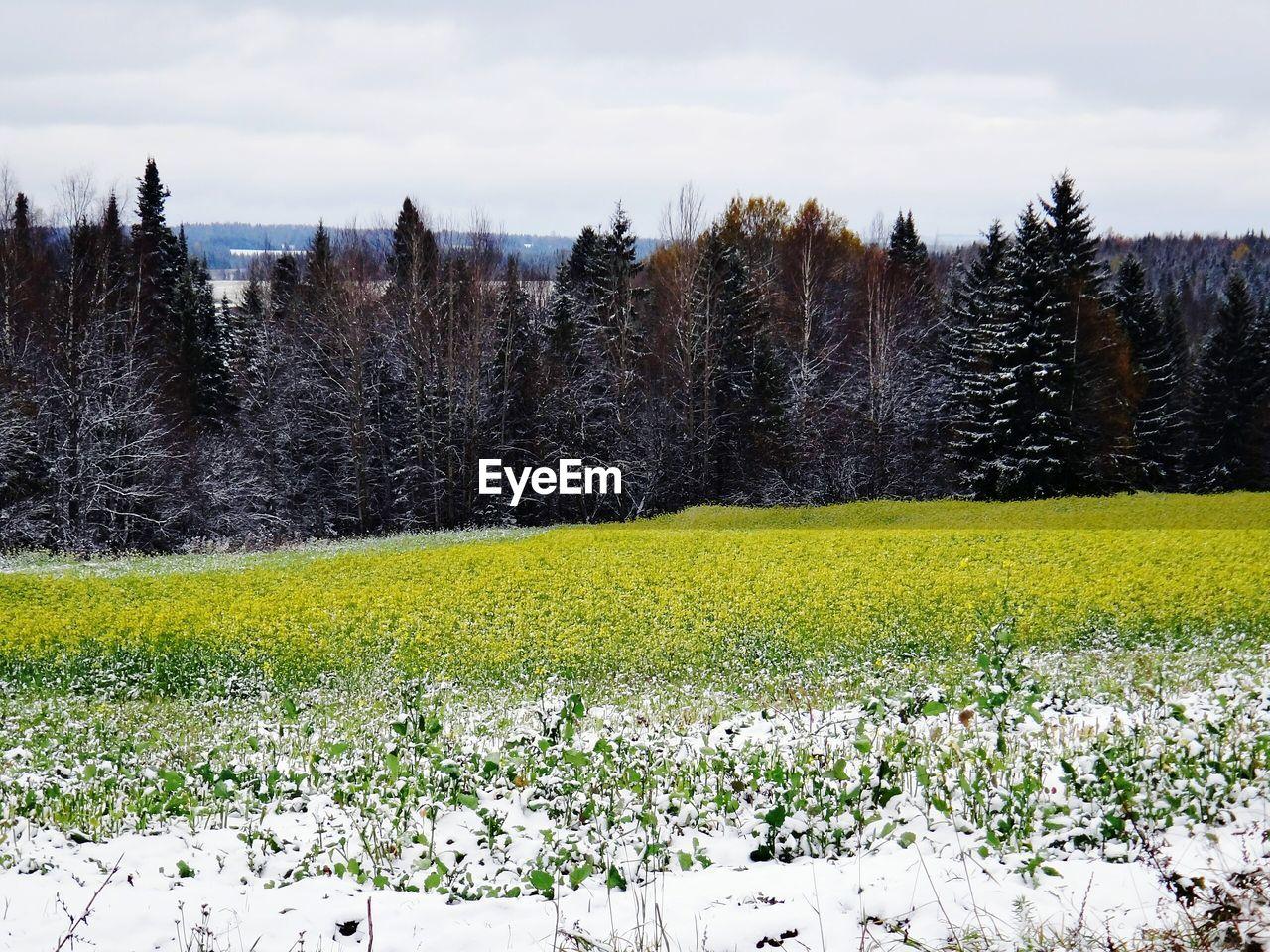 Flowerbed In Winter Scenery