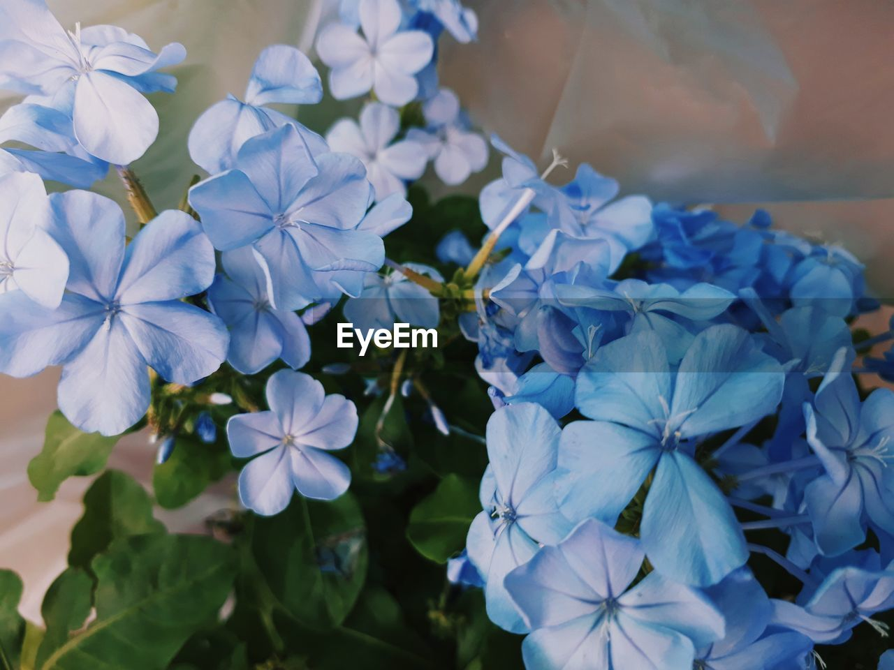 flowering plant, flower, plant, fragility, vulnerability, freshness, beauty in nature, petal, growth, close-up, blue, flower head, inflorescence, nature, day, outdoors, no people, focus on foreground, white color, purple