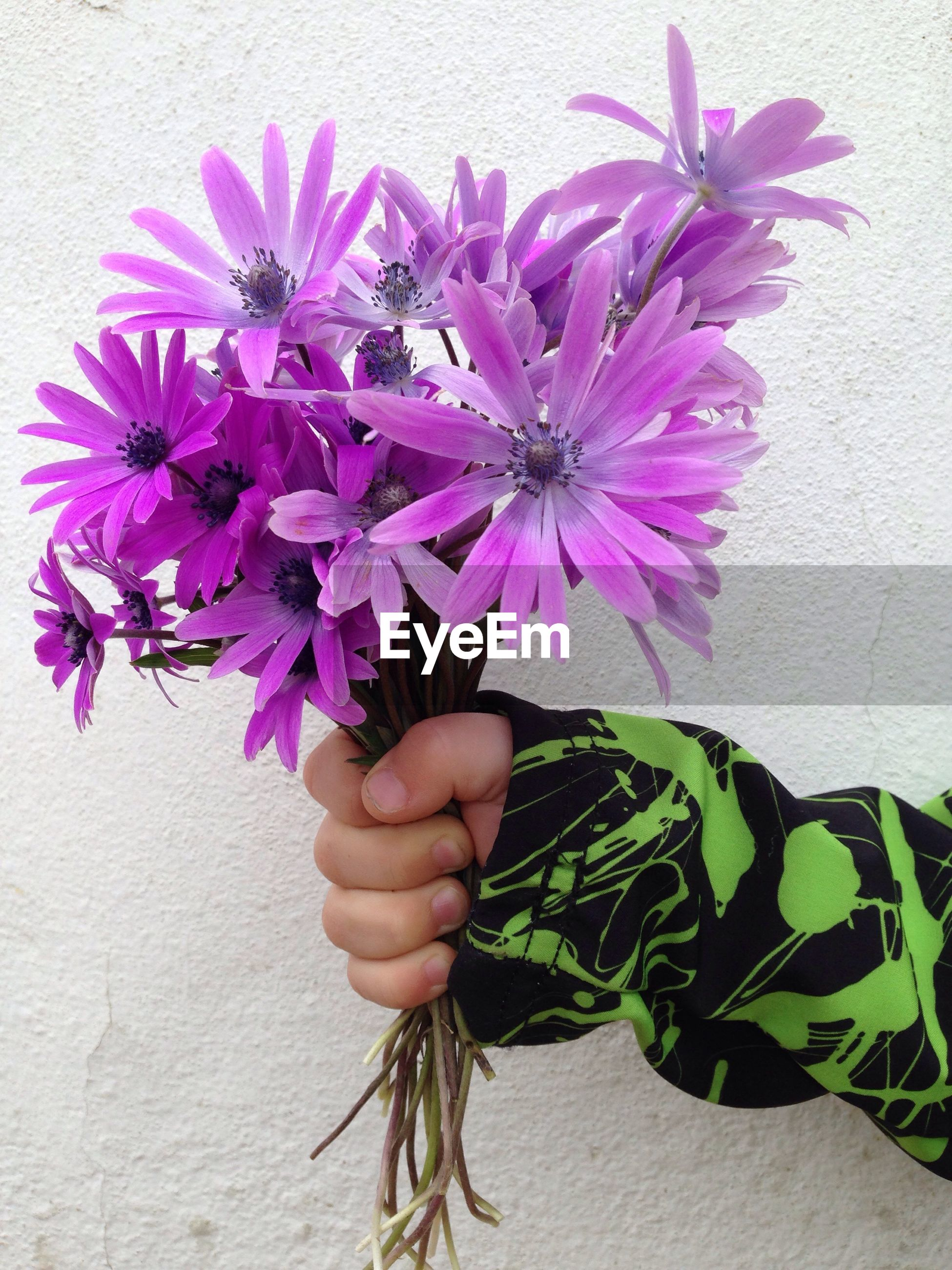Cropped hand holding purple flowers by white wall