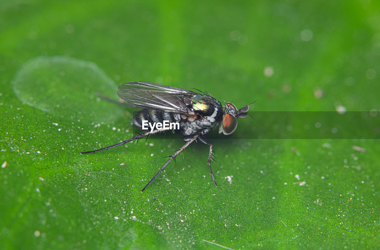 animal themes, one animal, animal, insect, animal wildlife, animals in the wild, invertebrate, green color, fly, animal wing, close-up, leaf, plant part, housefly, plant, nature, selective focus, no people, day, focus on foreground, animal eye