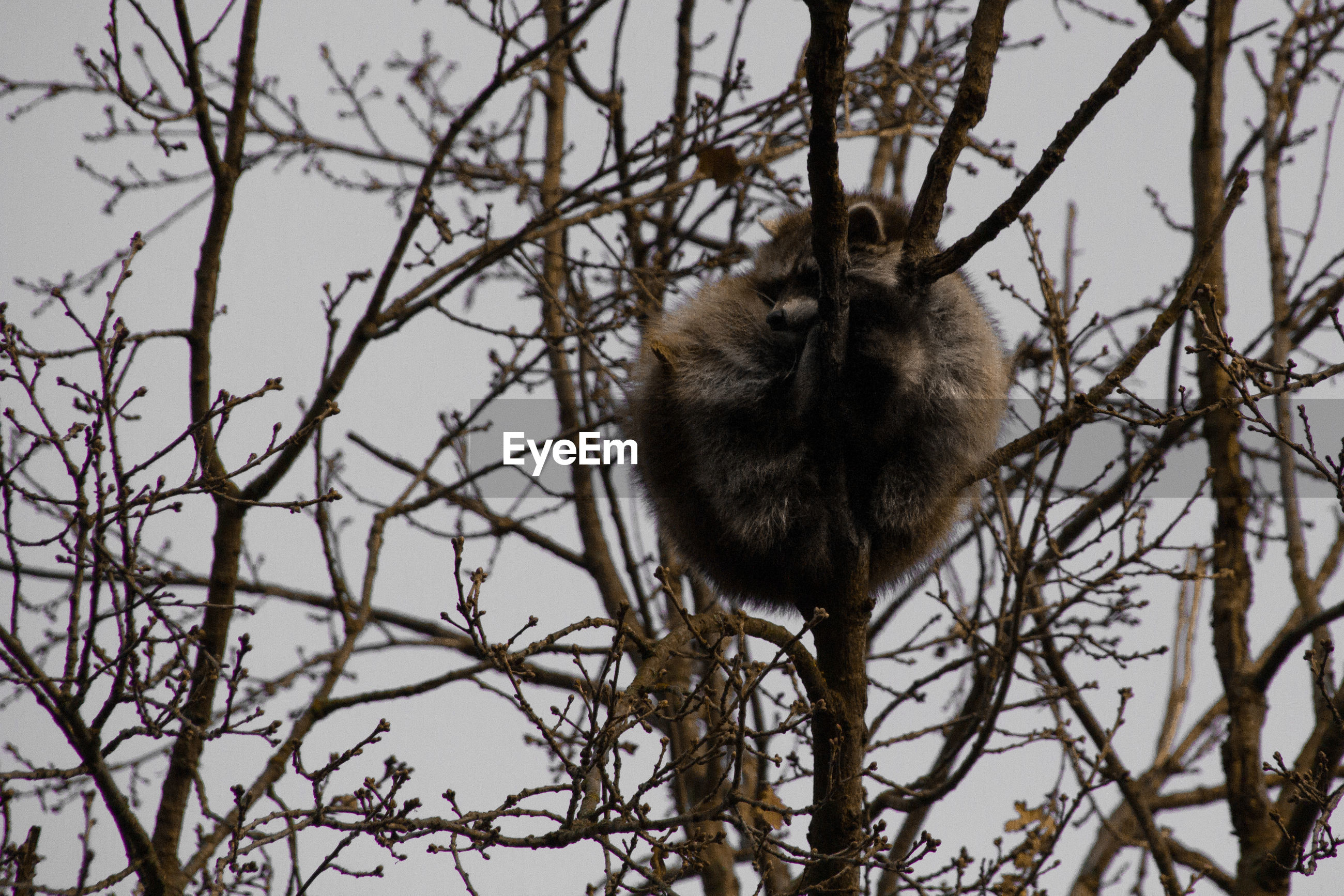 LOW ANGLE VIEW OF MONKEY SITTING ON BARE TREES