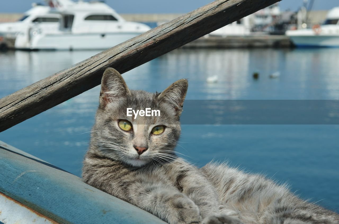 Portrait Of Cat At Harbor