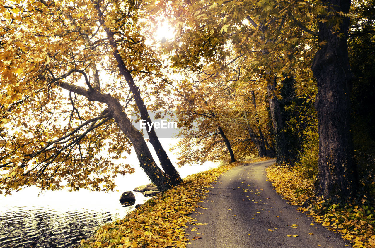 Road with fallen leaves by river during autumn