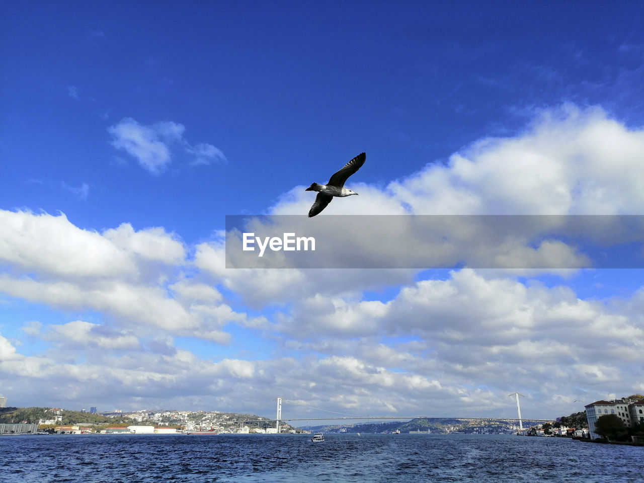 sky, bird, water, animal themes, animal, vertebrate, animals in the wild, animal wildlife, cloud - sky, flying, sea, one animal, no people, nature, beauty in nature, day, spread wings, mid-air, scenics - nature, outdoors, seagull