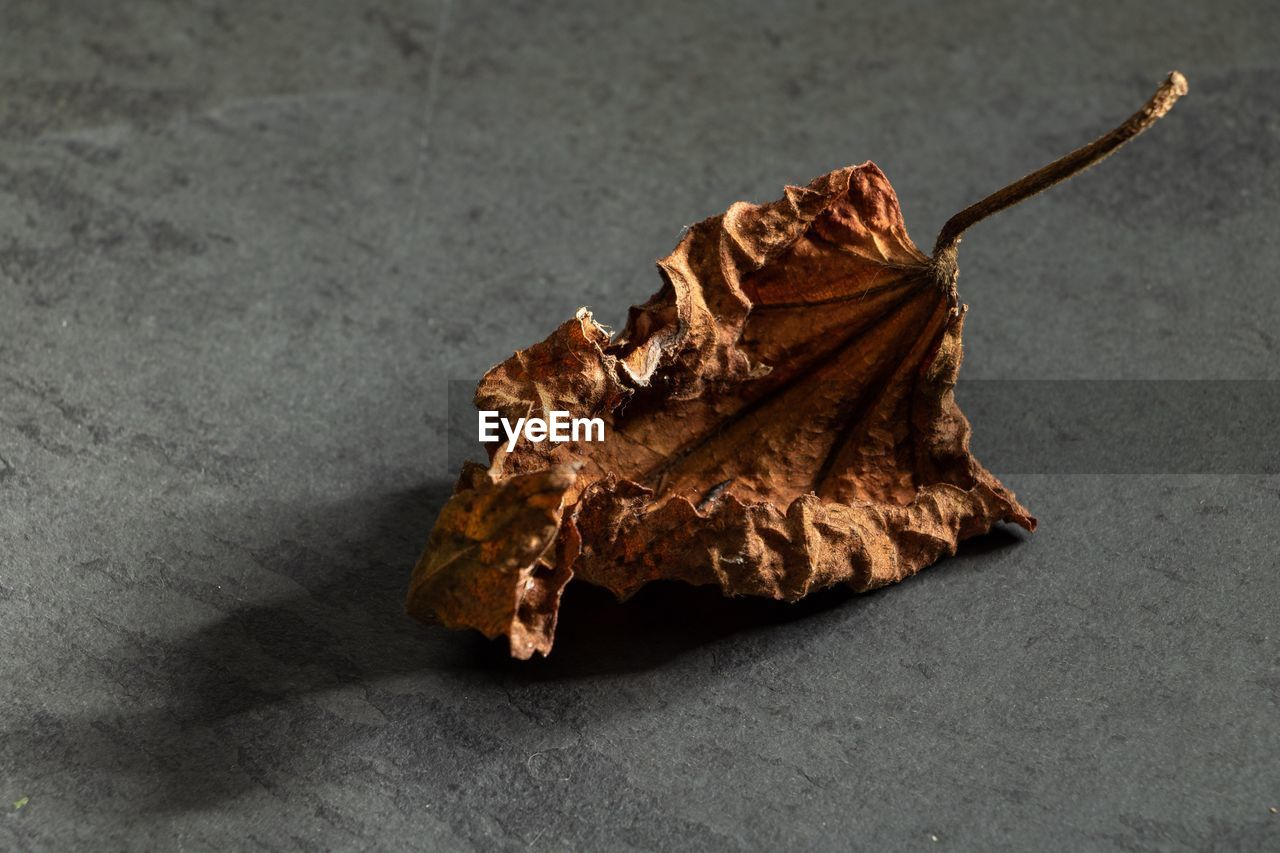 leaf, dry, plant part, close-up, no people, vulnerability, fragility, nature, change, single object, still life, autumn, brown, high angle view, dried, indoors, beauty in nature, wilted plant, leaves, natural condition, dead plant