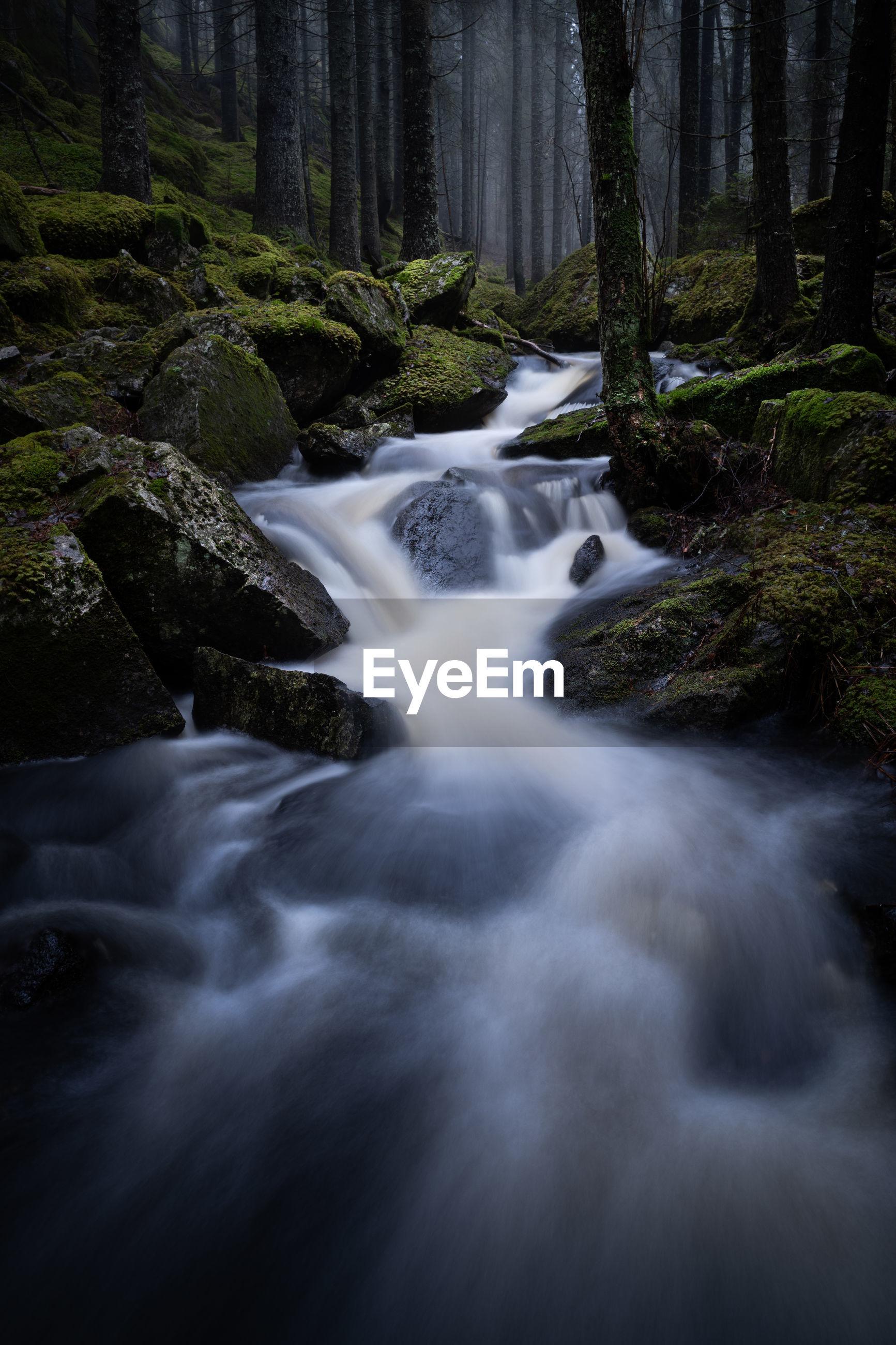 Creek flowing between moss-grown rocks through a moody forest