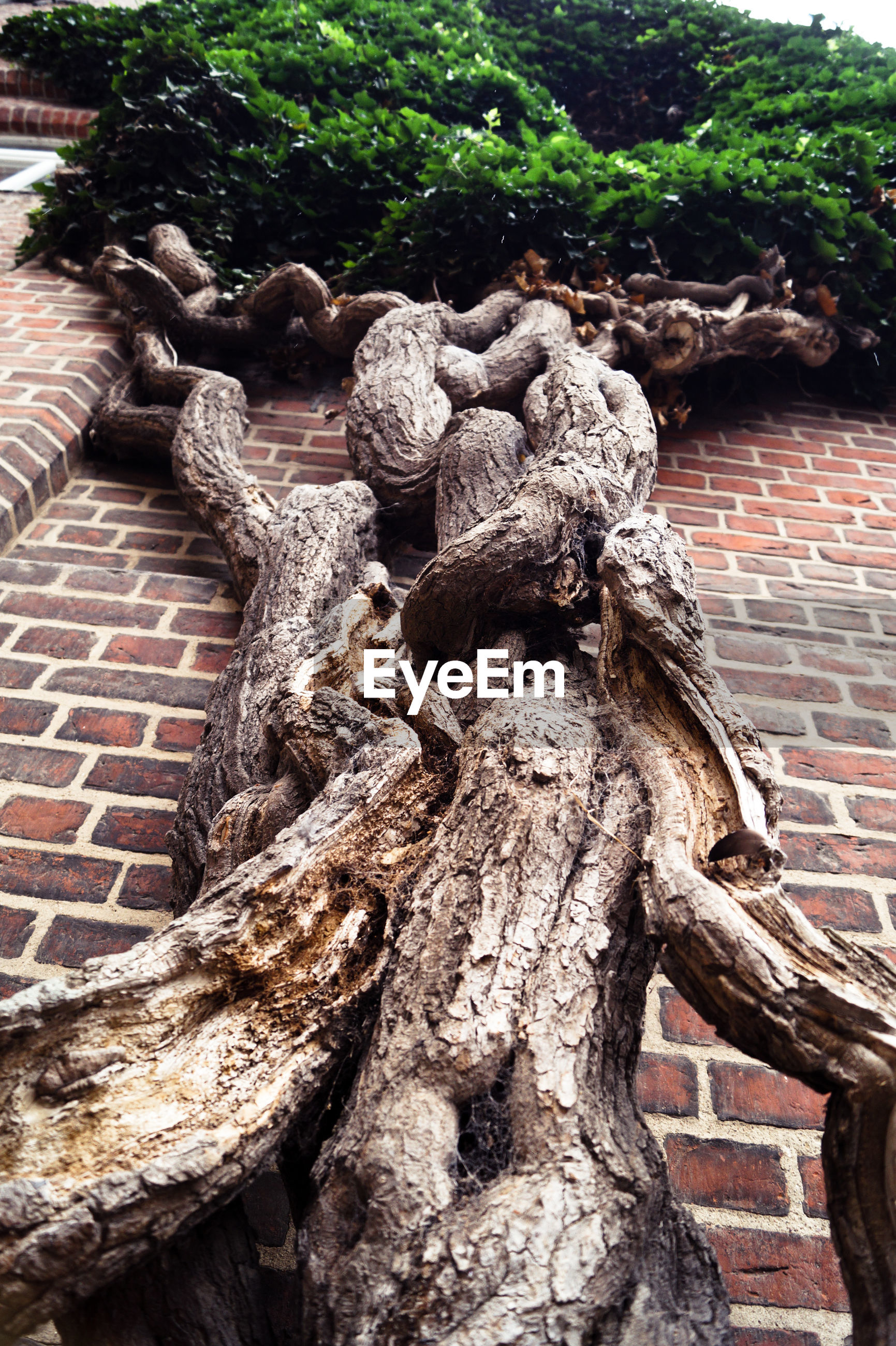 Low angle view of tree by brick wall