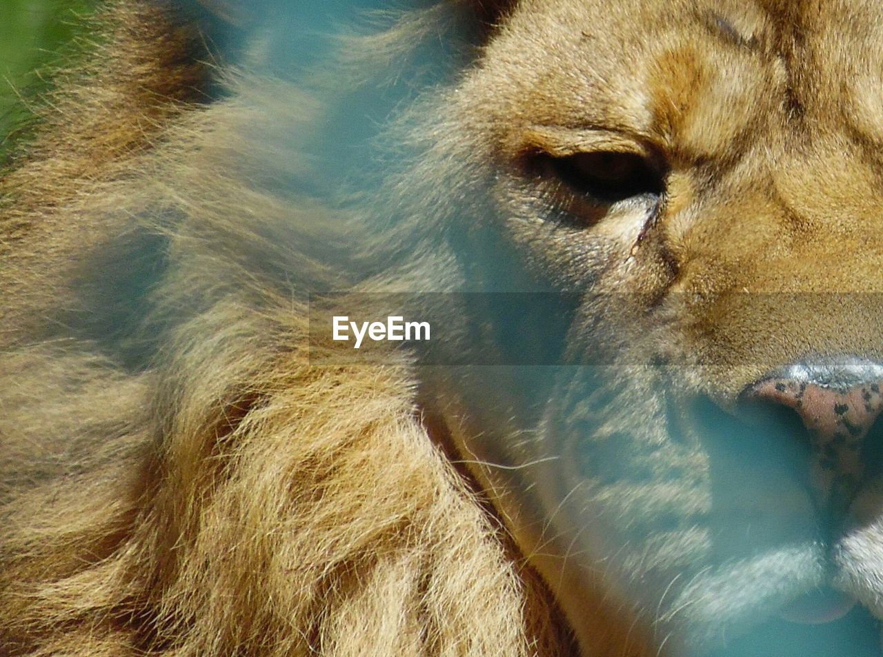 mammal, animal themes, one animal, domestic animals, animal head, no people, close-up, day, outdoors