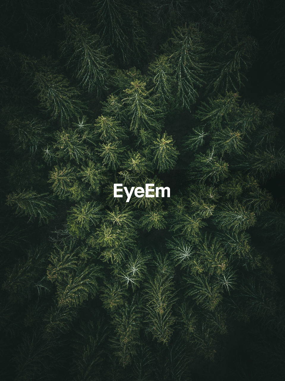 plant, growth, green color, no people, nature, tree, backgrounds, full frame, beauty in nature, day, tranquility, close-up, pattern, outdoors, land, branch, field, freshness, coniferous tree, high angle view, needle - plant part, pine tree, fir tree