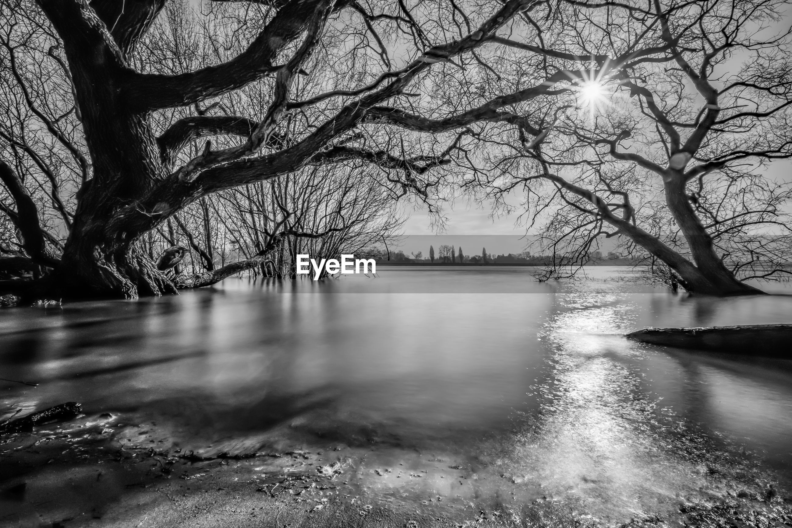 SCENIC VIEW OF BARE TREES BY RIVER DURING WINTER