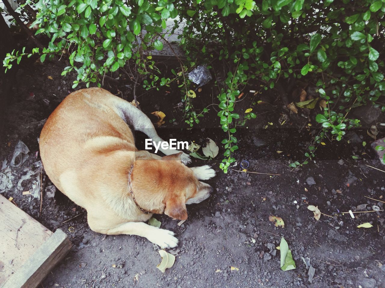 High Angle View Of Dog Relaxing By Plants On Street
