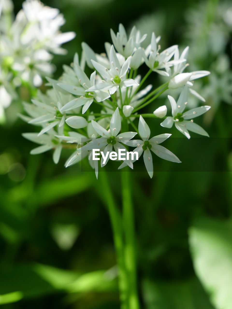 flower, flowering plant, vulnerability, fragility, freshness, plant, beauty in nature, growth, close-up, petal, white color, focus on foreground, nature, no people, flower head, day, green color, inflorescence, botany, outdoors